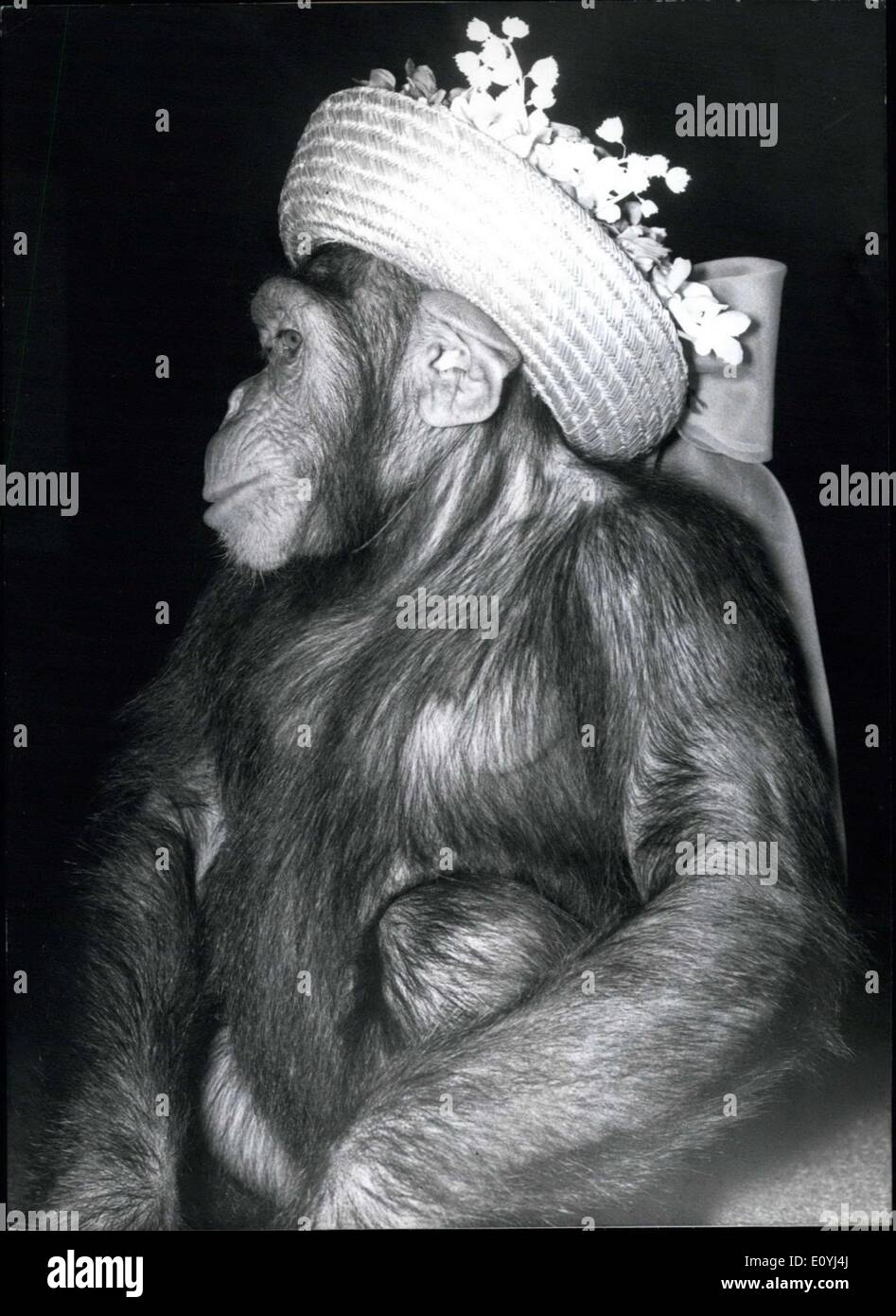 Jun. 30, 1970 - Partner-Look: On the occasion of a fashion show to be seen these days in Munich the latest rage from the world of fashion was presented: the partner-look of the up to date gentleman and his dog and last not least the corresponding summer hat collection for Michel the chimpanzee (photo) - Stock Image