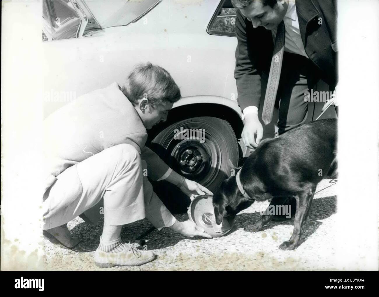 Sep. 09, 1970 - Dog noses 8,5 kilogram of Hashish: The ''drug-dog'' Scotty has given proof of his nosing ability: The police dog ''Scotty'' (Frankfurt), prepared for discovering drug hiding places, has helped the criminal investigation to a ''good find''. According to police reports 8,5 kg of hashish and almost 1000 LSD-''trips'' could be secured which were found by searching a public house in the station quarter. Consequently a presentation of this splendid specimen of a dog took place at the Ministry of the Interior. - Stock Image