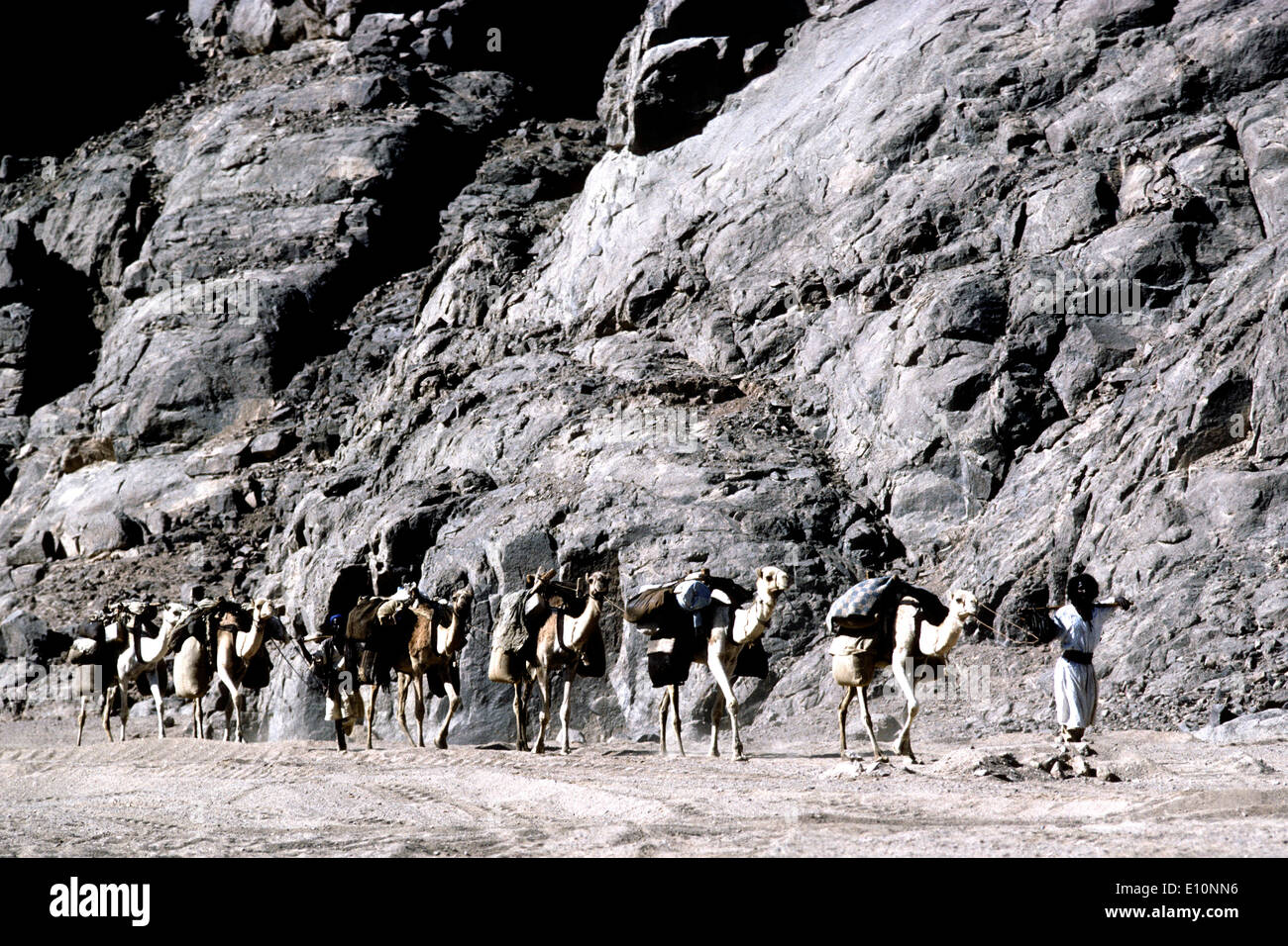Camel caravan of the Beja (Bishari) tribe in Upper Egypt. Travelling from Aswan to Sudan. - Stock Image