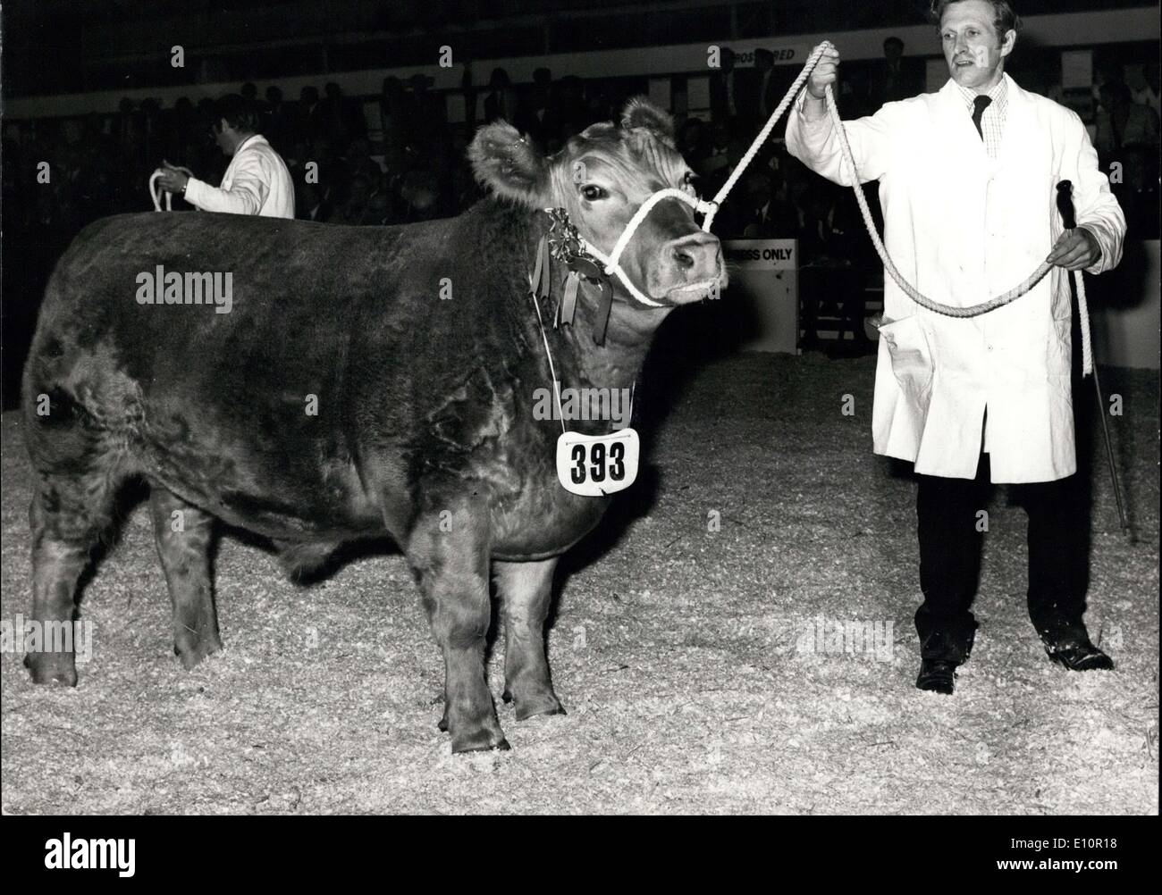 Dec. 04, 1973 - SUPREME CHAMPION AT ROYAL SMITHFIELD SHOW.  PHOTO SHOWS:- ''Clunk-Click''- an 18 - Stock Image