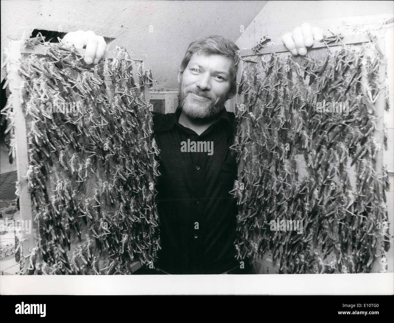 Feb. 02, 1974 - An Awesome hobby; Mr. Erwin Cordes, 37 from Dusseldorf is Germany's first locust breeder (pictured here some of - Stock Image
