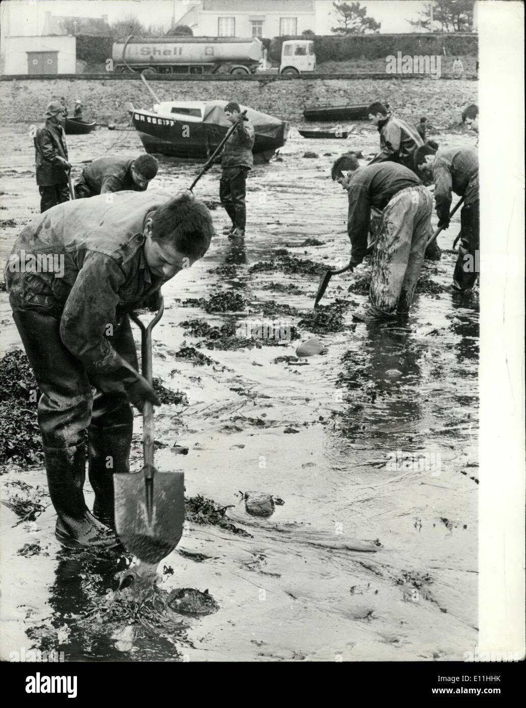 Mar. 03, 1978 - Oil crisis on the Brittany beaches. Disaster to bird and marine life has already arrived on the french coastline, as a result of the oil discharged by the Amoco Cadiz oil tanker. Tremendous efforts are being made by the local police. aided by volunteers from all over France, to lesson the effects. Schoolchildren on holiday are traveling from Paris to help. Hundreds of plastic brackets and small containers have been collected in warehouses for distribution to the army of helpers and veterinary experts are at work saving as many sea birds as they can - Stock Image