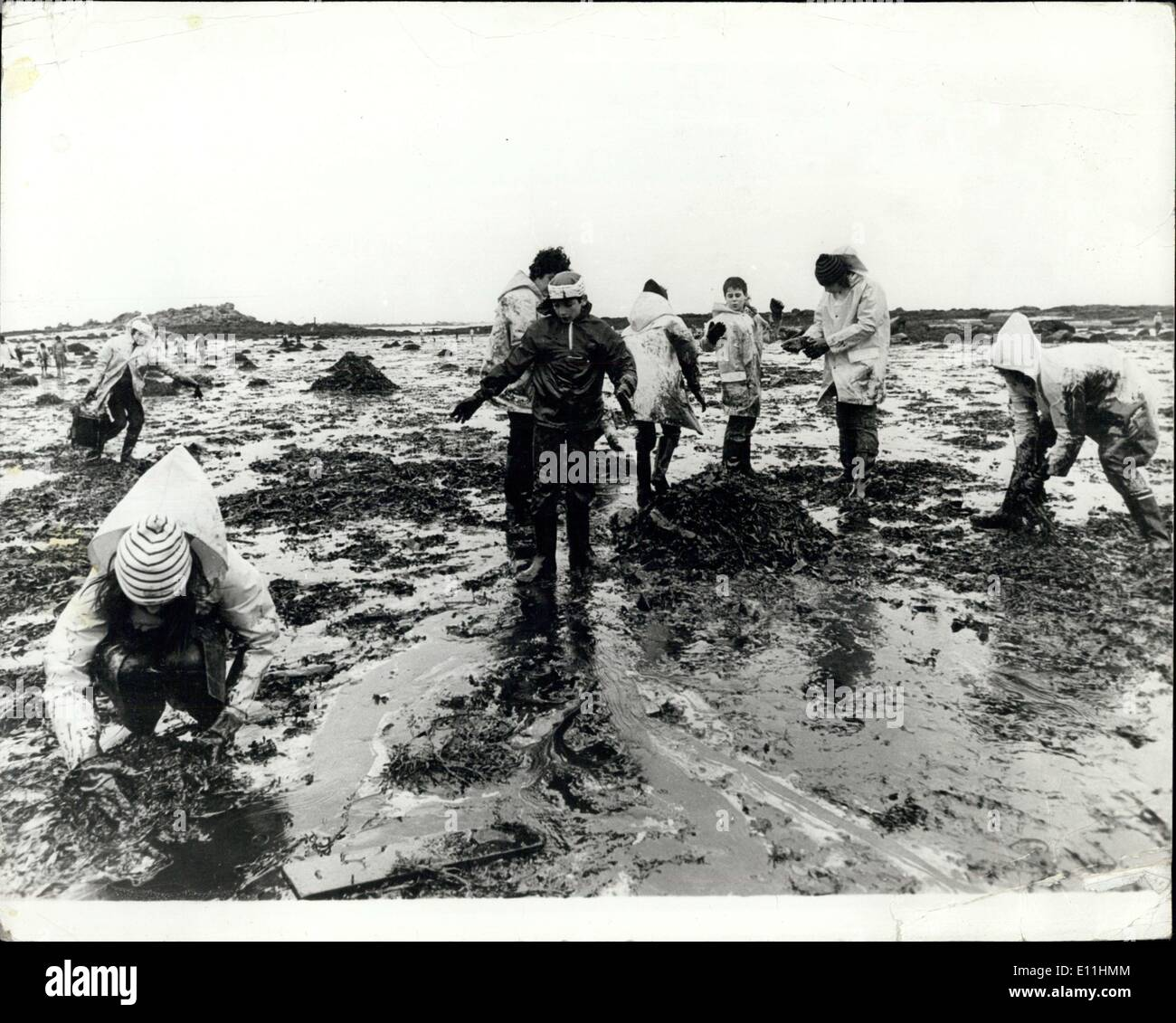 Mar. 31, 1978 - Oil Crisis On The Brittany Beaches: Disaster To Bird And Marine Life Has Already Arrived On The French Coastline, As A Result Of the Oil Discharged By The Anoco Cadiz Oil Tanker. Efforts Are Being Made By The Local Police, Aided By Volunteer From All Over France, With Schoolchildren On Holiday Travelling From Parts To Help Clear The Beaches. Photo shows Young Volunteers Helping To Clear The Beaches Of Oil On The Brittany Coast. - Stock Image