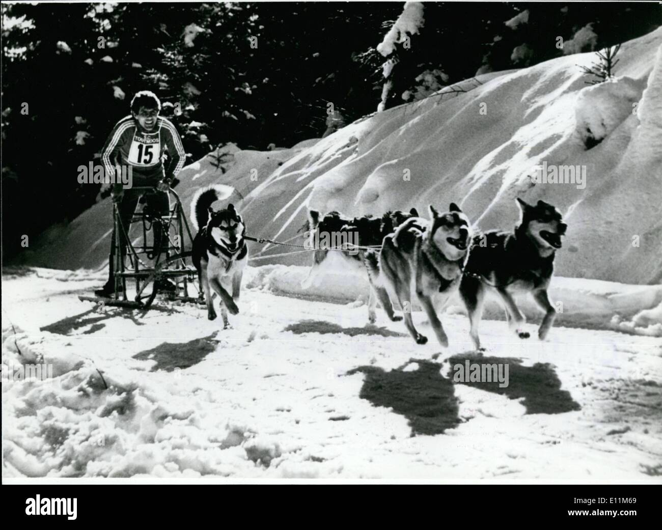 Jan. 26, 1979 - January 26th until 28th 1979; International German Mastership om Husky Race in Todtmoos/ West Germany: Huskies are not only to see at Greenland, but for instance also in the Black Forest/West Germany and specially in Todtmoos.On January 26th until 28th this year there will be here a great lot of Escimo dogs. The Reason: at these days there will take place here the International German mastership in Husky race. More than 130 sledges are expected to the final races, among them 72 teams from foreign countries - Stock Image
