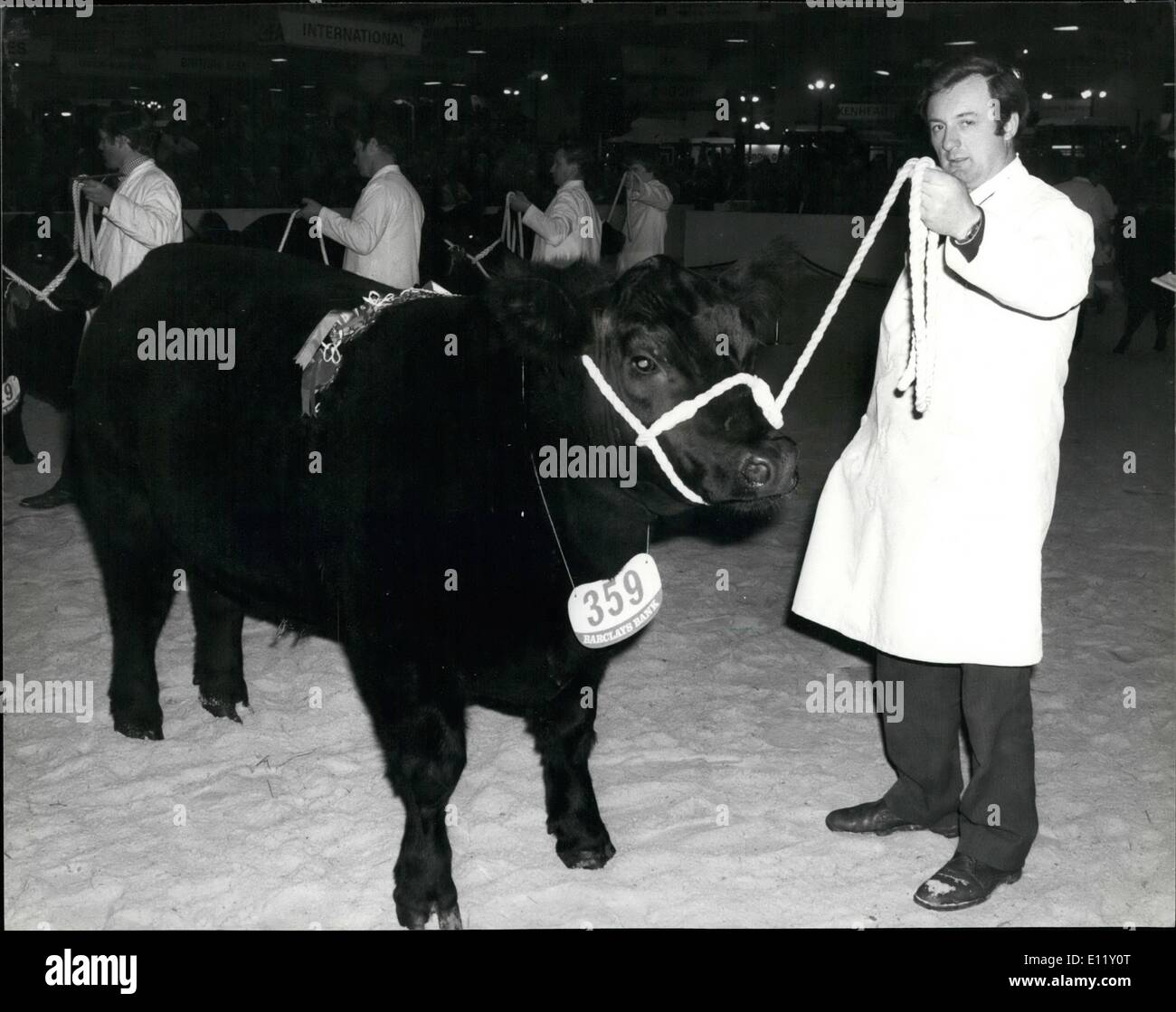 Dec. 02, 1980 - December 2nd 1980 Panda of Westdrums is supreme champion. The supreme champion at this year's - Stock Image