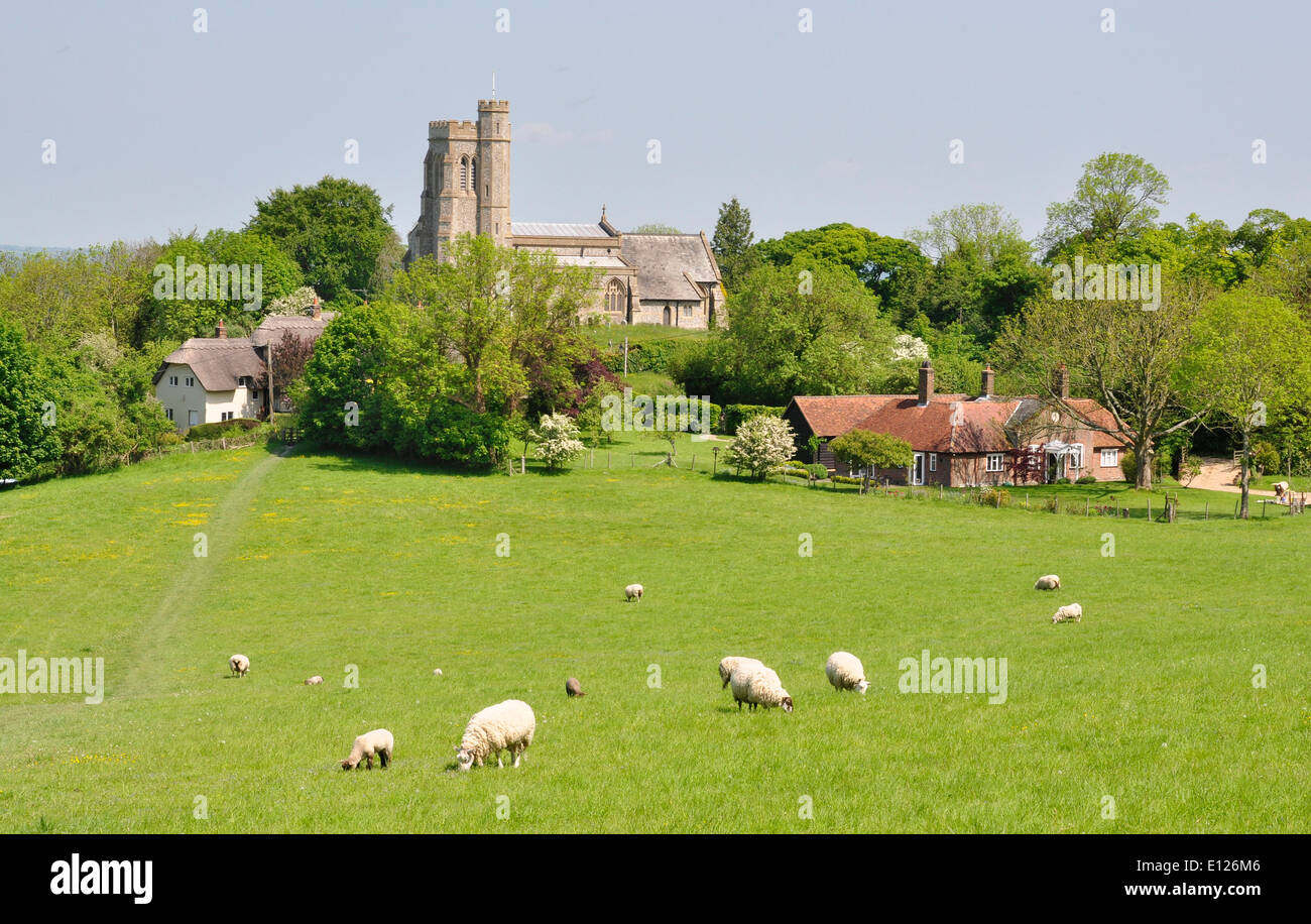 Bucks - Chiltern Hills - Ellesborough - view across meadows with grazing sheep to St Peter + St Paul's church - Stock Image