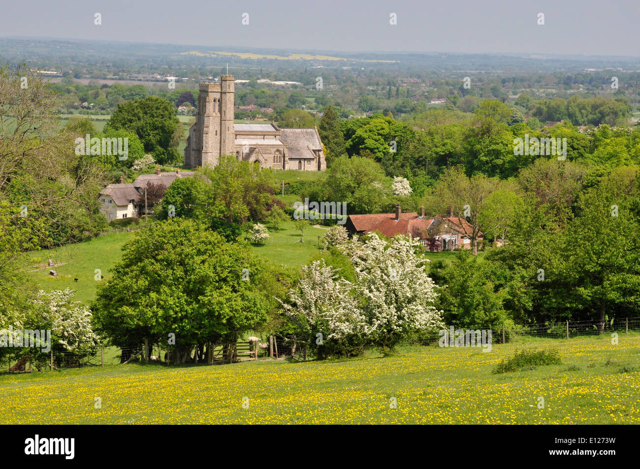 Bucks - Chiltern Hills - Ellesborough - view high on Beacon Hill over fields and hedgerows to parish church - spring sunlight - Stock Image