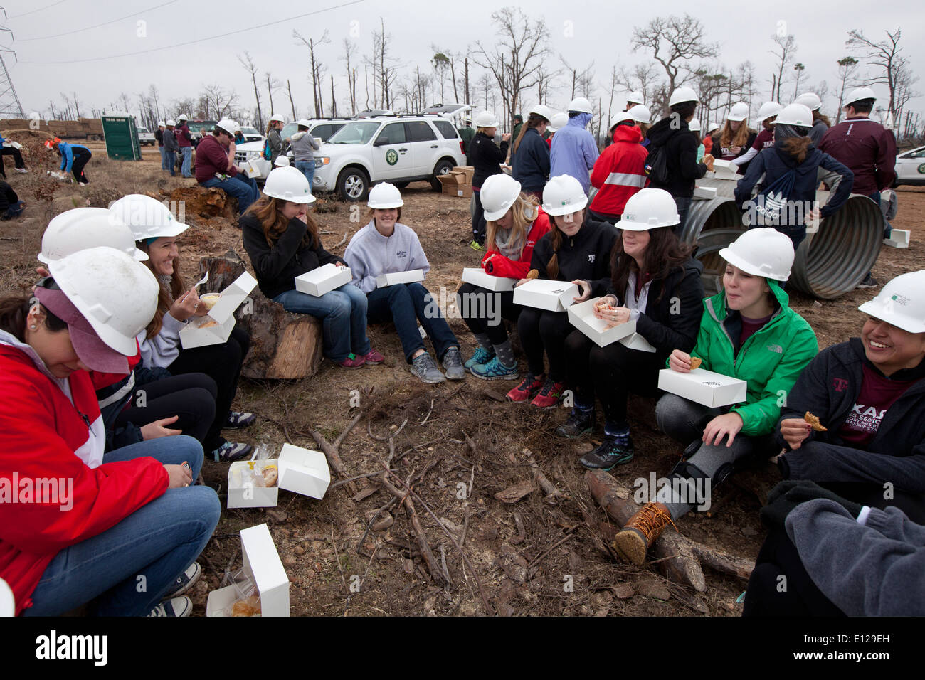College students participate in 'Aggie Replant' on-going effort to replant loblolly pine forests ravaged by wildfires in 2012 - Stock Image