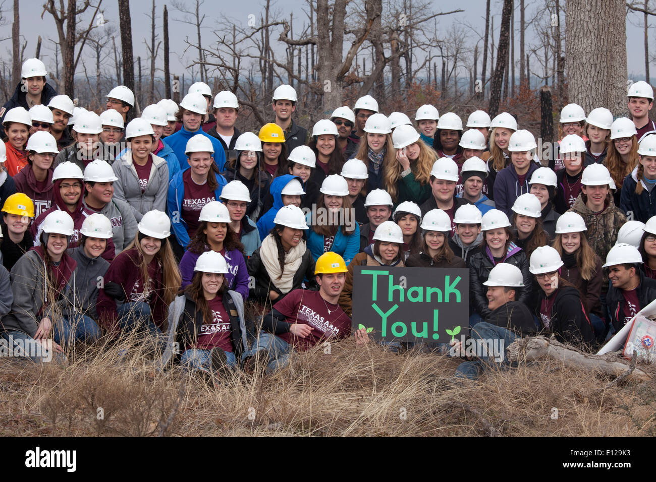 Group picture of college students who volunteered to plant loblolly pine seedlings in forest ravaged by wildfires in 2012 - Stock Image