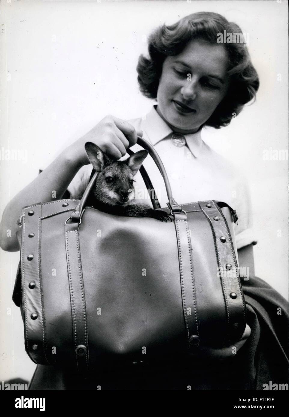 Dec. 20, 2011 - A large leather bag is used as a substitute for mother's pouch, and Penny looks quite comfortable as she - Stock Image