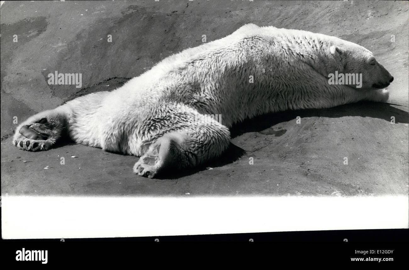 Jan. 10, 2012 - August 15th, 1973 This heat rather gets you down. Photo Shows: Polar bear Sam, father of the London Stock Photo