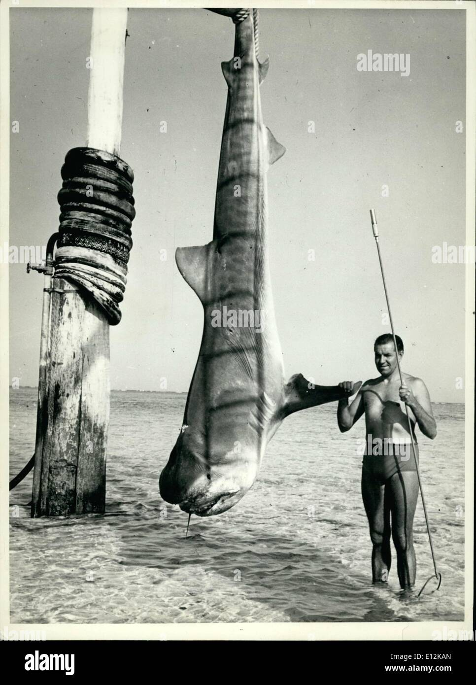 Feb. 24, 2012 - Wally Gibbins and his lift, 800 lb Tiger Shark he killed with a 10 range shotgun at Sykes Reef near Heron Is Old, the largest shark ever killed by shotgun or underwater. - Stock Image