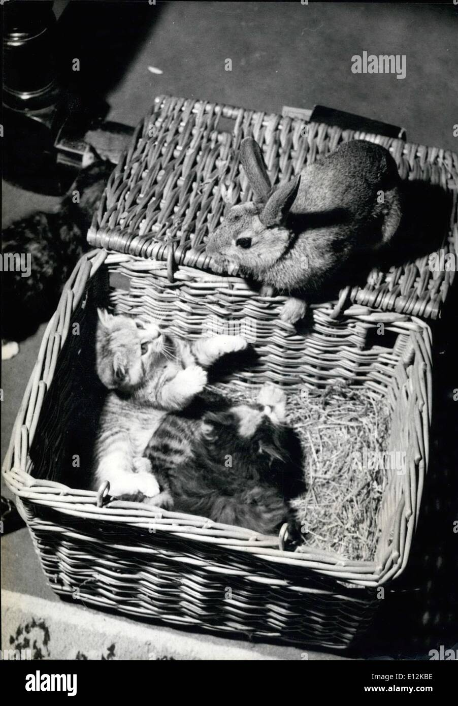 Feb. 24, 2012 - Odd Men cut it's wrigglemuse, the rabbit: Beware! Bunny's on the basket. the Kittens seem to be saying. Bunny, is the domesticated rabbit belonging to Mrs. Johnson wife of a farmer near Briston, which was reared by her ginger cat at the same time as the kittens. All are really great friends, but the rabbit loves teasing the kittens by suddenly appearing on the lid of the laundry basket which serves as their bedroom. - Stock Image