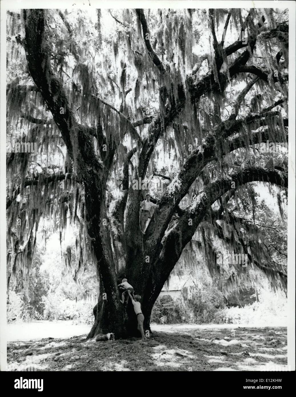 Feb. 24, 2012 - A TREE LOVES YOU Ecology-consciousness has spread to every aspect of life. Strickers saying .A Tree Loves You,. - Stock Image