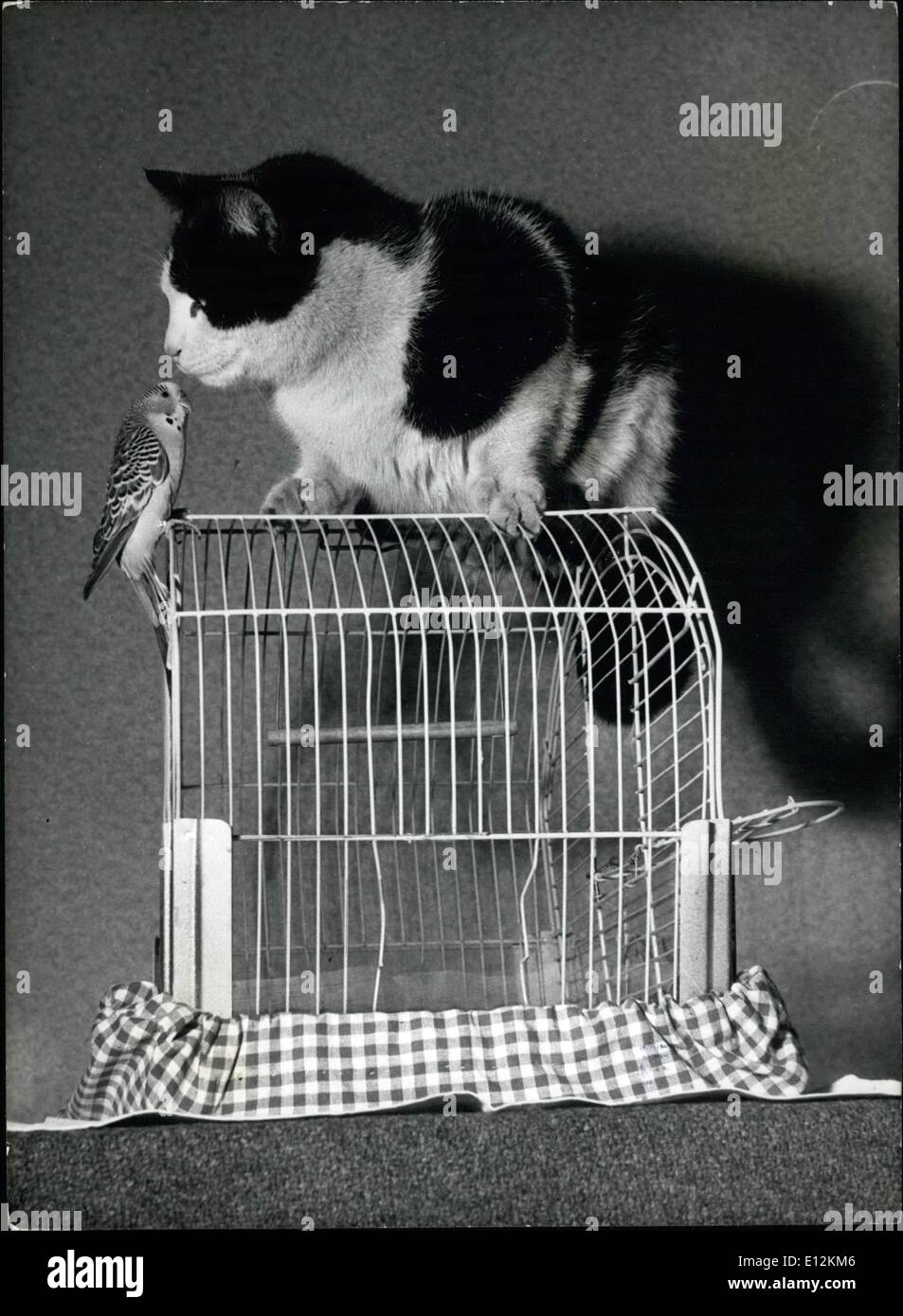 Feb. 24, 2012 - Jerry doesn't spend much time inside his cage but Fluffy often sits on top of its and Jerry climbs op to say ''How do you do! - Stock Image