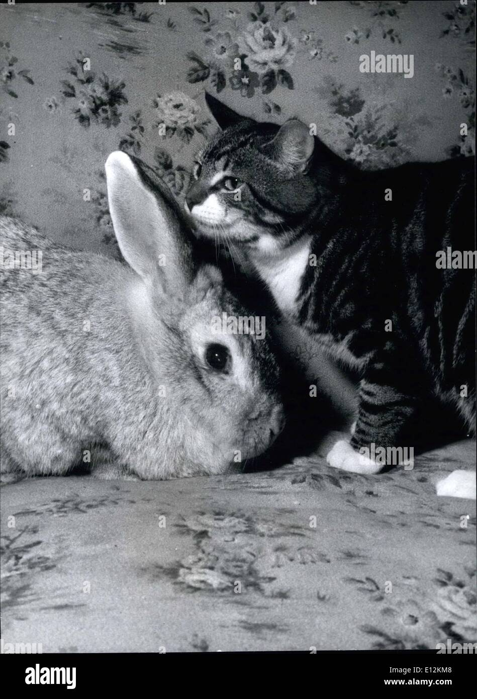 Feb. 24, 2012 - Duet from Buster and Joey the 12-year-old rabbit probably 'Getting to know you' - Stock Image