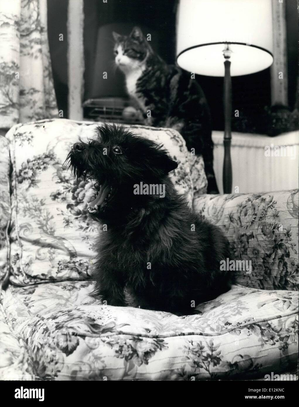 Feb. 24, 2012 - The world's riches dog: Sherry, an 8 year-old dark-grey cairn terrier is a lucky dog if ever was one. For the rest of his life his future is assured because if an income left to his of 33,000 by his late mistress, Mrs. Vera Mason Rac. St. James Road, New Brighton, Cheshire, who died, aged 60, in December 1968. Recently the solicitor who administers the estate declared that the balance of the money cannot be distributed ti animal charities until he knows how much it has cost to keep Sherry until he dies.The dog's guardian, Mr - Stock Image