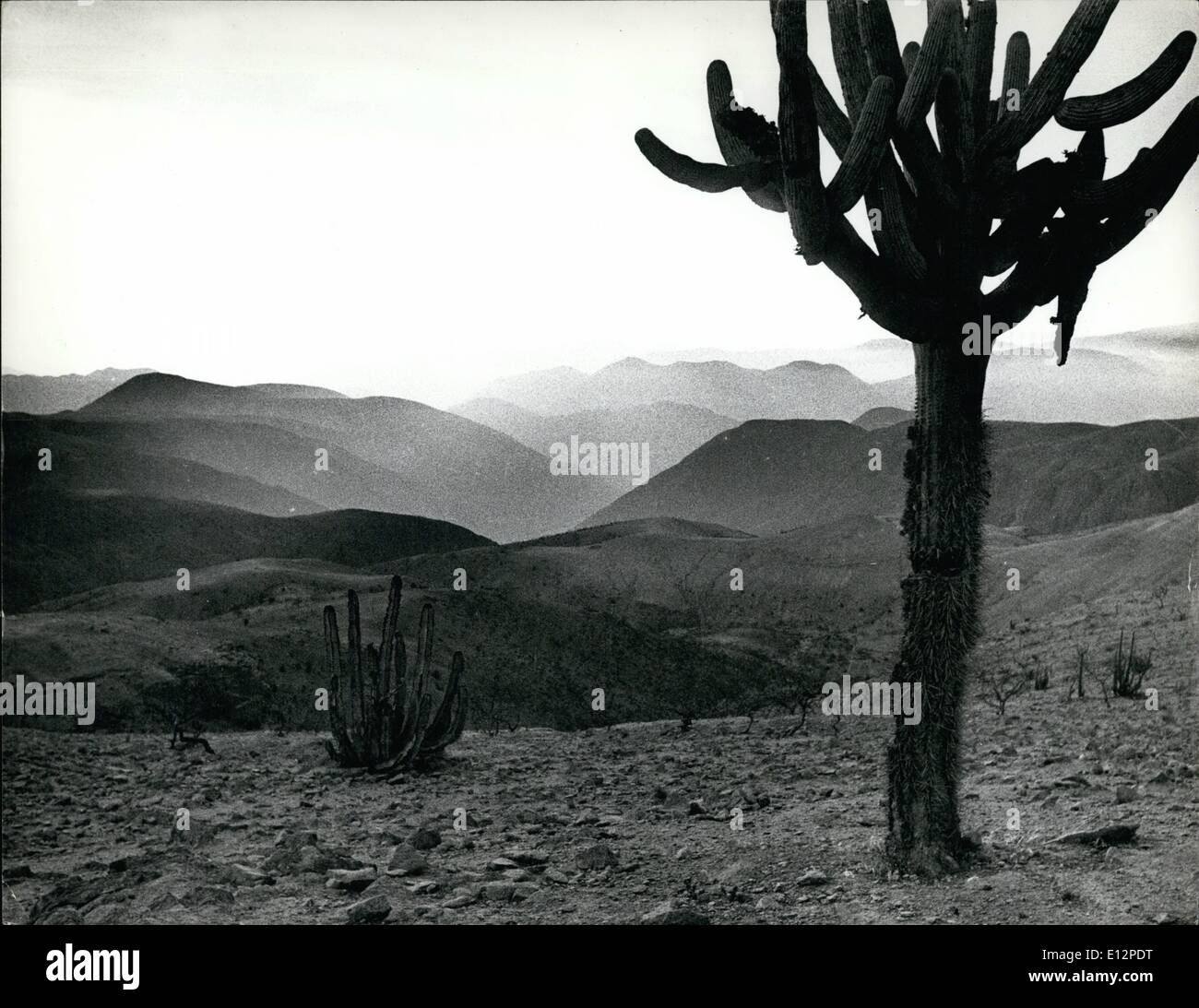 Feb. 24, 2012 - Western Andes of Peru to desert foothills - talon at a height of 8,000 ft. Cacius is typical of this region. - Stock Image