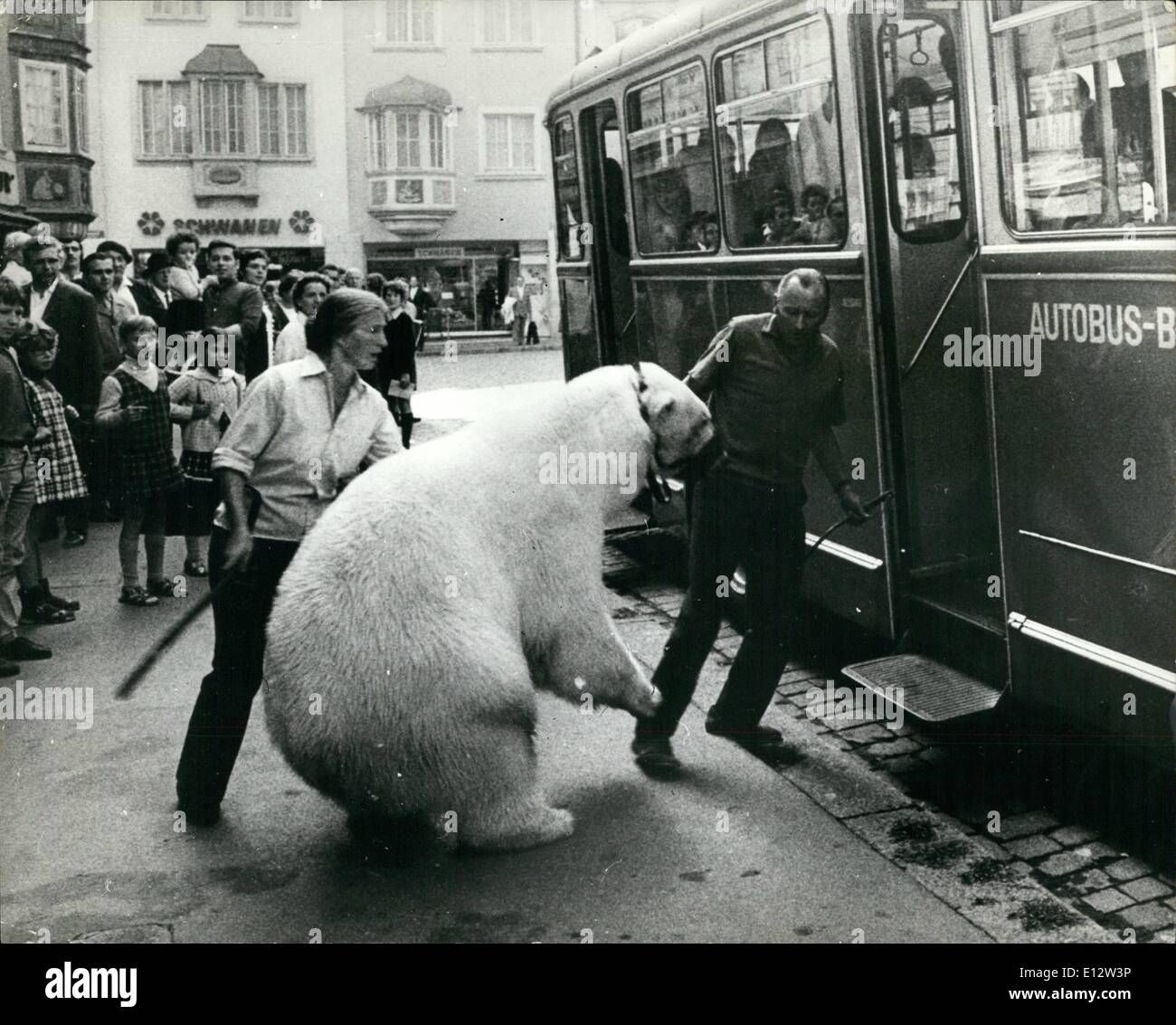 Feb. 25, 2012 - A reluctant passenger: It took a lot of pushing and pulling to get this polar bear onto the bus at Schaffhausan, Switzerland. The passengers did not find its presence unbearable. - Stock Image