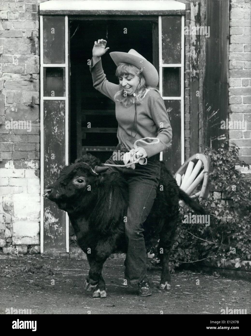 Feb. 25, 2012 - Ride 'em cowgirl! Vivien Brooke, the daughter of Mrs Jean Haddock, who owns Beteman's Green Farm tries ''Titch'' out as a bucking bull. - Stock Image