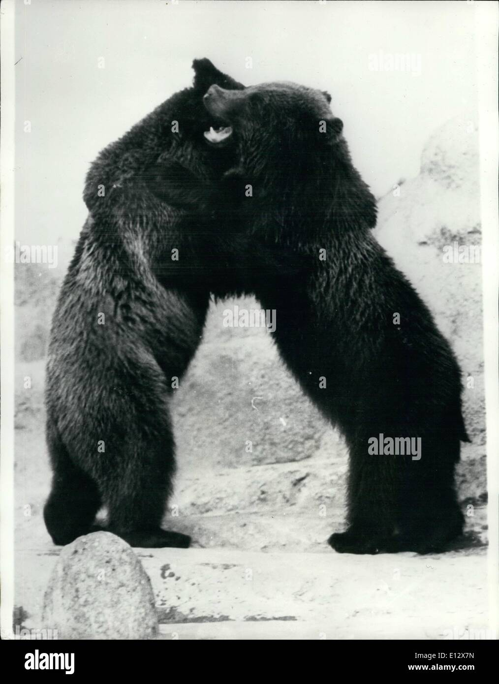 Feb. 25, 2012 - Bear Hug : ''it's Lovely to meet you again'' said the two bears as they got in to a fond Embrace. - Stock Image