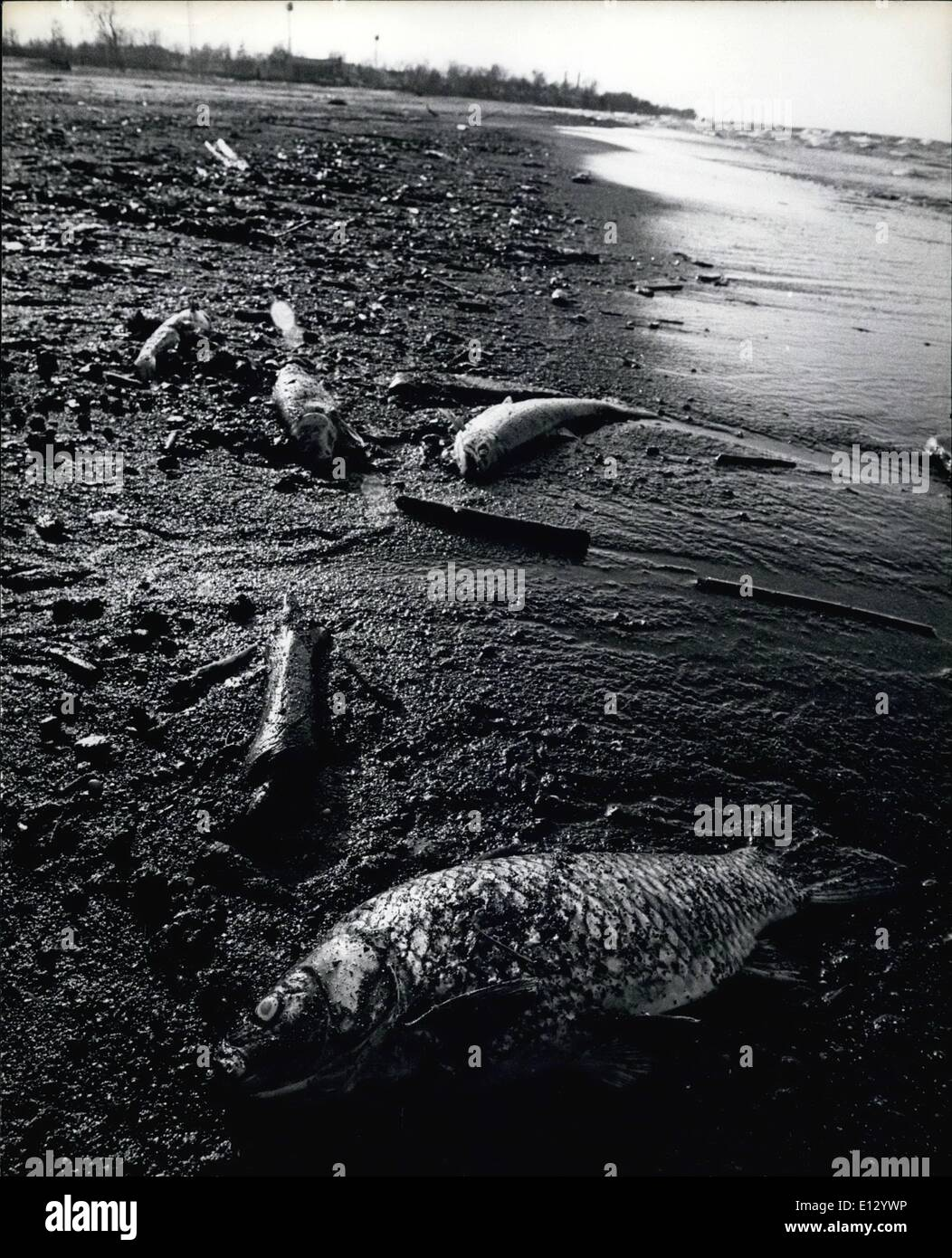Feb. 26, 2012 - Lake Ontario, N.Y. Dead fish on beach. - Stock Image