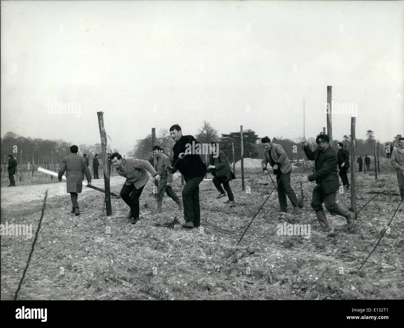 Feb. 26, 2012 - Angry Farmers Destroy Orchard: Anfry farmers from Lude, near Le mans, broke into an apple tree orhards Stock Photo