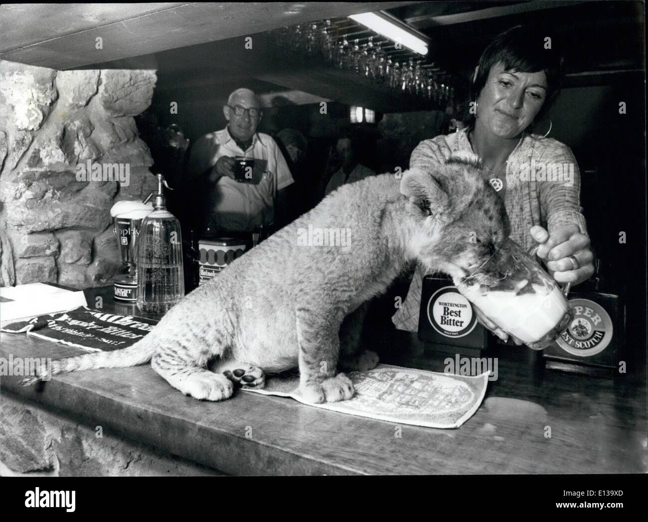 Feb. 29, 2012 - A quick pint of the best milk for Jason, on the bar of the White Lion, served personally by pub Stock Photo