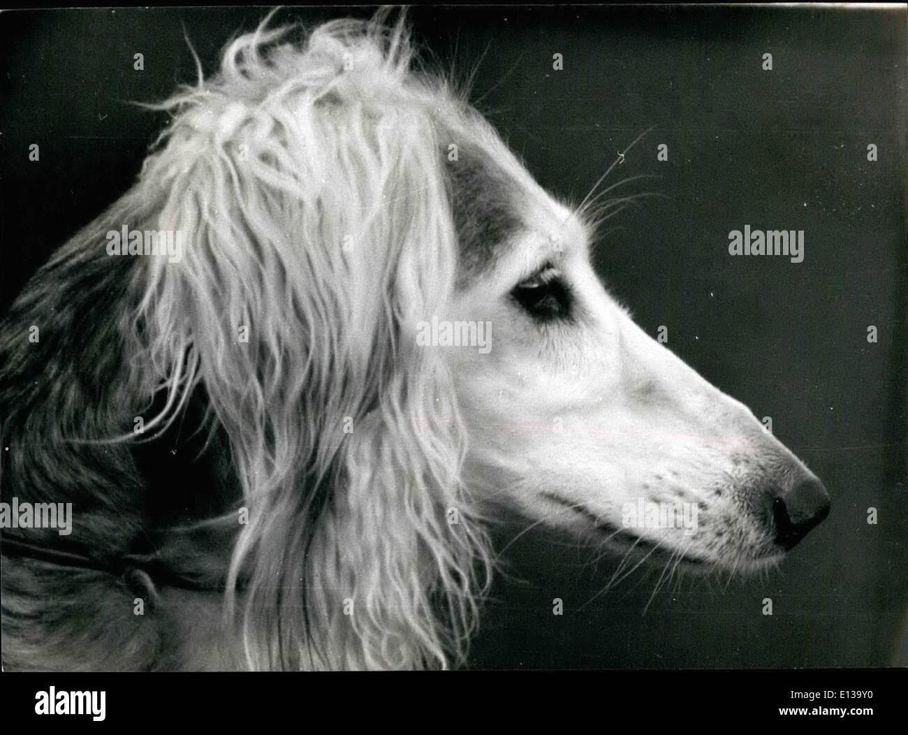 Feb  29, 2012 - The Head of a Saluki - Oldest Dog In The