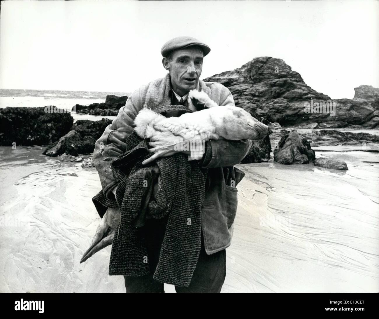 Mar. 02, 2012 - Ken Jones: The Man who saves the seas. Instrumental in the fight to save lives of hundred of baby seals washed up on the coasts of Cornwall, is 42 year old welsh cafe proppietor Ken Jones,of St. Agnes. Ken first became interested in seals in 1961, when he resound a sick baby seal, Receiving much publicity in the local press. When another young seal was washed up, Ken was asked to look after it - and in a short time it was healthy and released - Stock Image