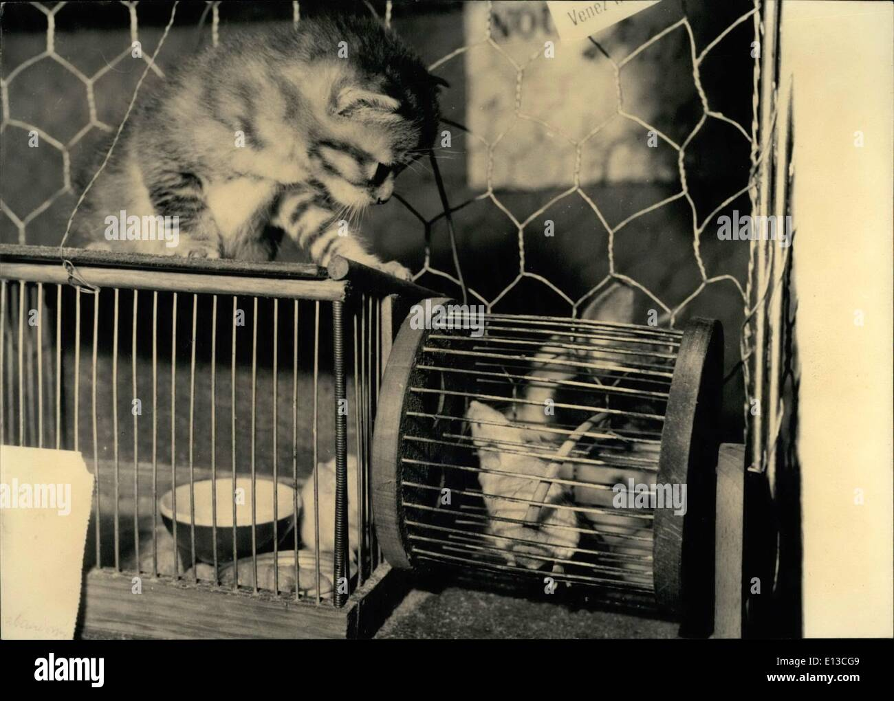 Mar. 02, 2012 - Friends or Enemies - OPS: This amusing shot was taken at the 15th Paris cat show now being held at the Salle Wagram. The Kitten and caged white mouse seem to wonder: Are they really enemies or can they be friends? - Stock Image