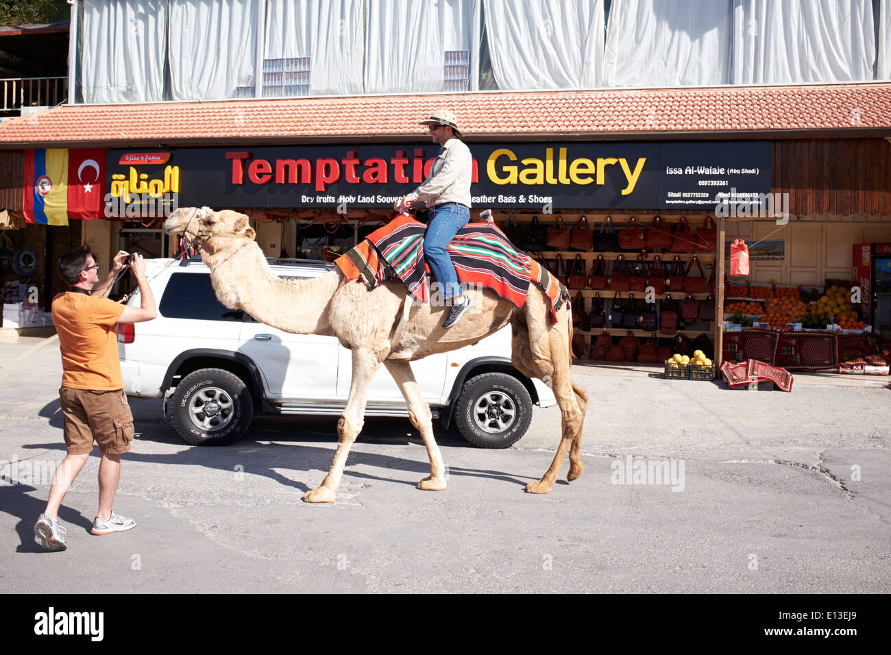 Tourist on camel in Jericho, West Bank, Palestine near The Mountain of Temptation - Stock Image