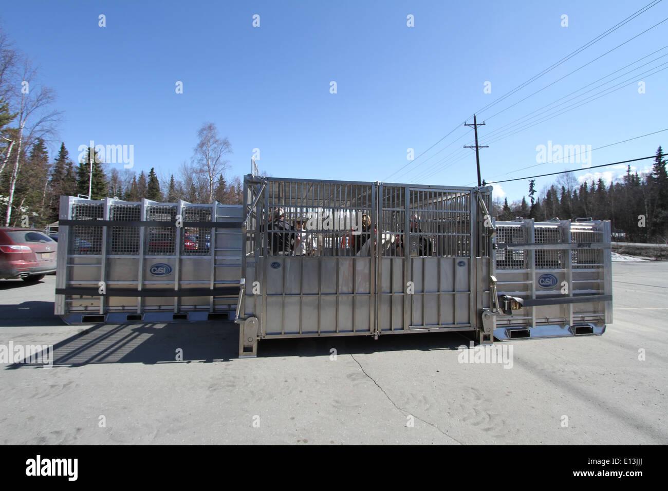 Polar bear oil spill response holding module - Stock Image