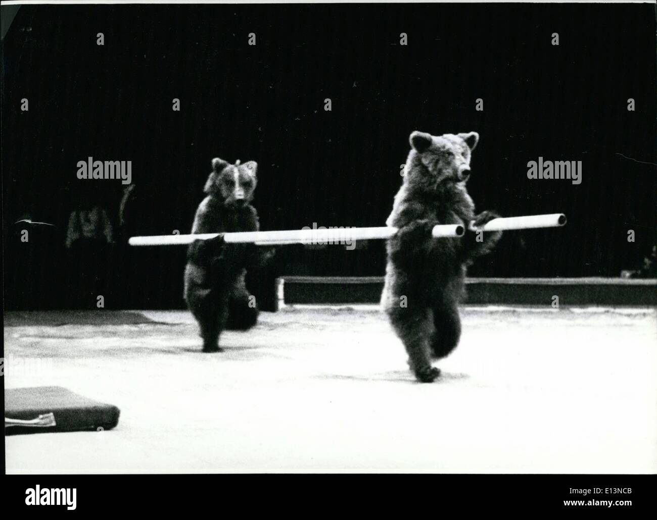 Mar. 02, 2012 - Russian National Circus In Munich: ''A leading part''.. play these brown bears in the Russian National Stock Photo