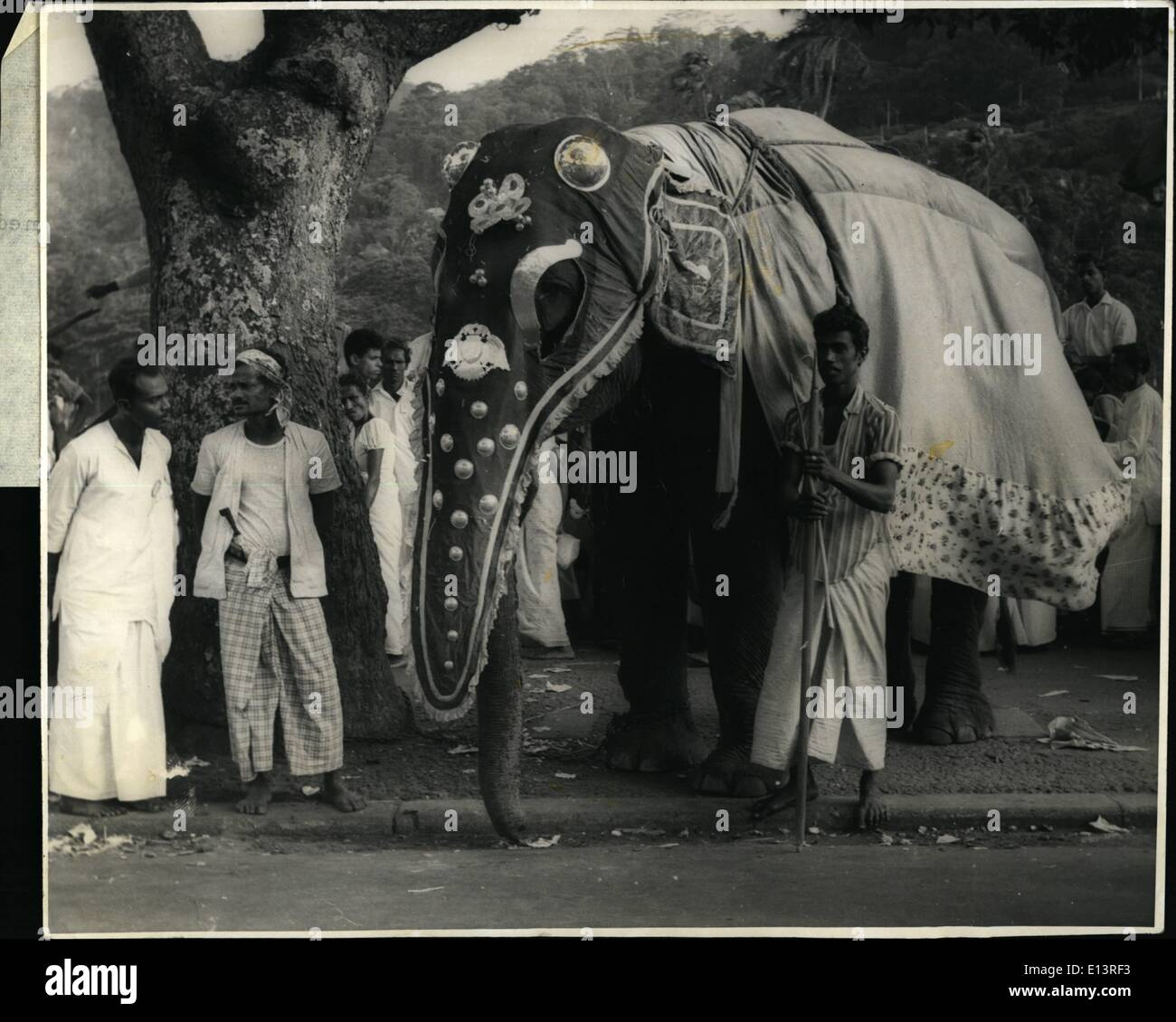 Mar. 27, 2012 - Ceylon Caption for photo, marked A: Last week/while the midnight procession of 120 tusker elephants in the world famous Kandy Perahera wended its way trough decorated streets of Ceylon's hill capital and tea-growing district, this caperisoned baby elephant who was unable to bear the glare of TV cameras and the glowing lights focussed on it, broke loose from the rest of the tamed herd, stampeded through the milling crowd of devotees and fled into the nearby jungle - Stock Image