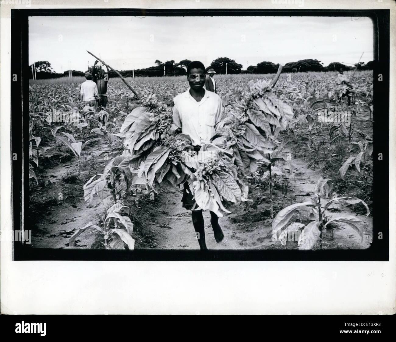 Mar. 27, 2012 - Rhodesia: Tobacco plantation. - Stock Image