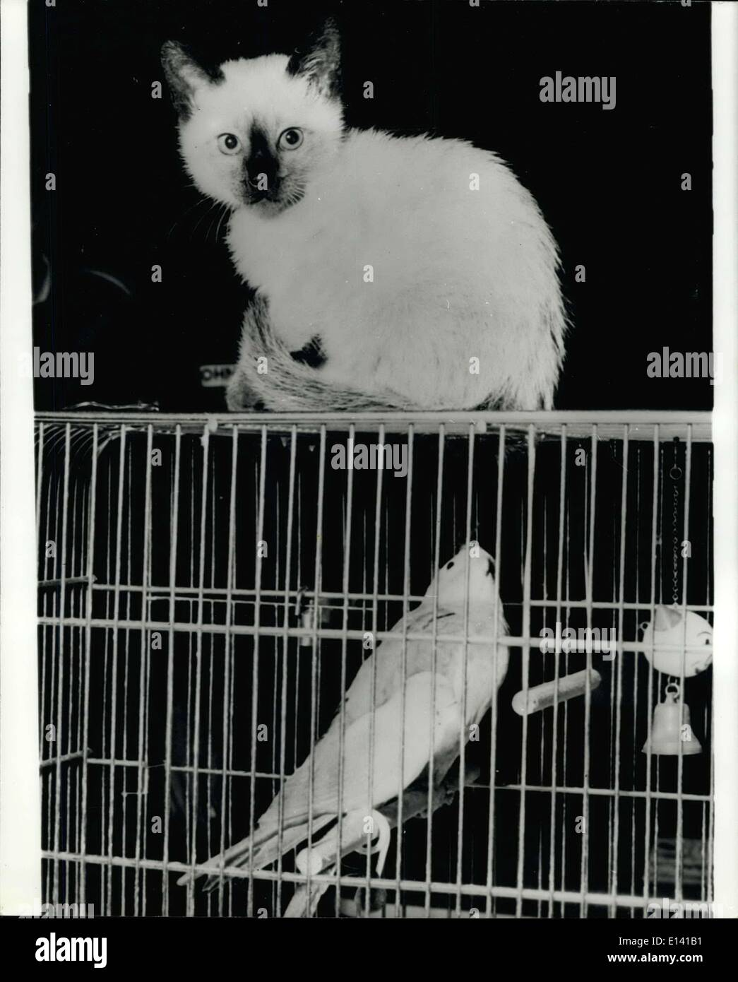 Mar. 31, 2012 - He Does'nt Get The Bord: Squarky, the Parrot looks up apprehensively at Scruffty the cat, who sits perched on top of his cage. - Stock Image