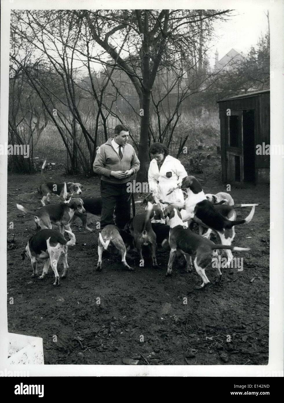 Mar. 31, 2012 - Frank Petter with Miss Virginia Brown with some of the now-tamed hounds of the Burto Pack at the N.C.D.L. establishment at Hampton, Middx. - Stock Image