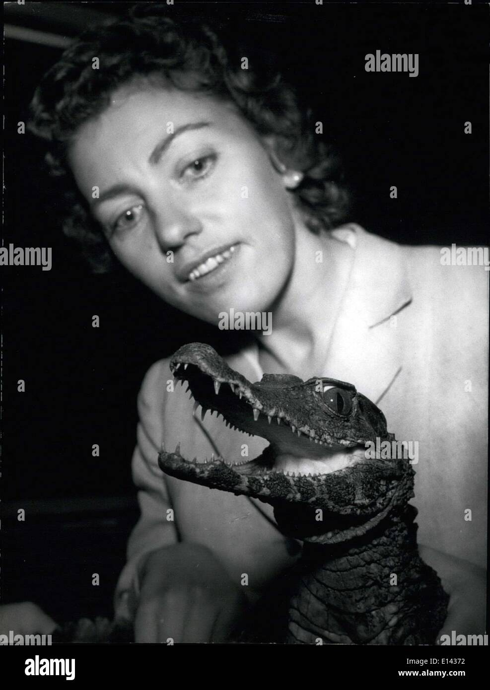 Mar. 31, 2012 - New animals for aquarium of Berlin and Dusseldorf. A rare freight yesterday on May 28,1958.by plane was arri¬ving at the air-port Dasseldorf-Lohausen, a crate with four living crocodiles, which a Berlin journalist was carrying home from Brazil for the aquarium of Dusseldorf and Berlin, Miss Ur¬sula Keisinger, who herself was capturing these animals together with some Red Indians, for some time was living in the Amazonas district - Stock Image