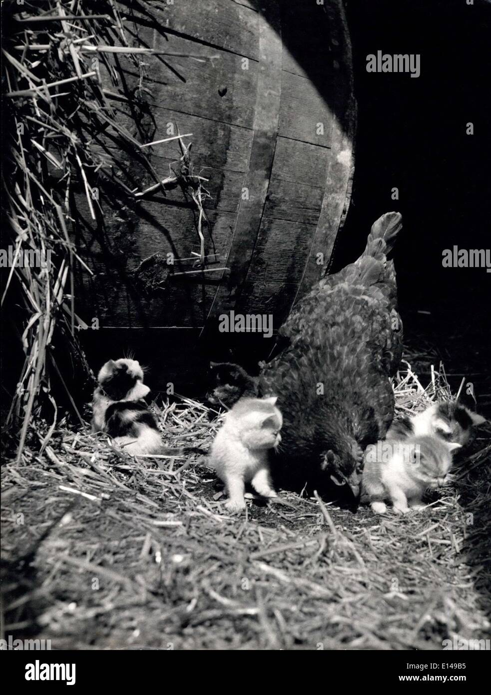 Apr. 17, 2012 - Fur And Feather Blend Together. Hen Does ''Kitten Sitting'' For Mother Cat. Occasionally Mother nature plays strange tricks and provides an exception to the rule that fur and feather don't get on. It's on of these phenomenons which has provided the main topic of conversations amount the inhabitants of the pretty village of Well-next-Sea, Norfolk. In the corner of a local corn merchant's yard a cat gave birth to five pretty little kittens - Stock Image