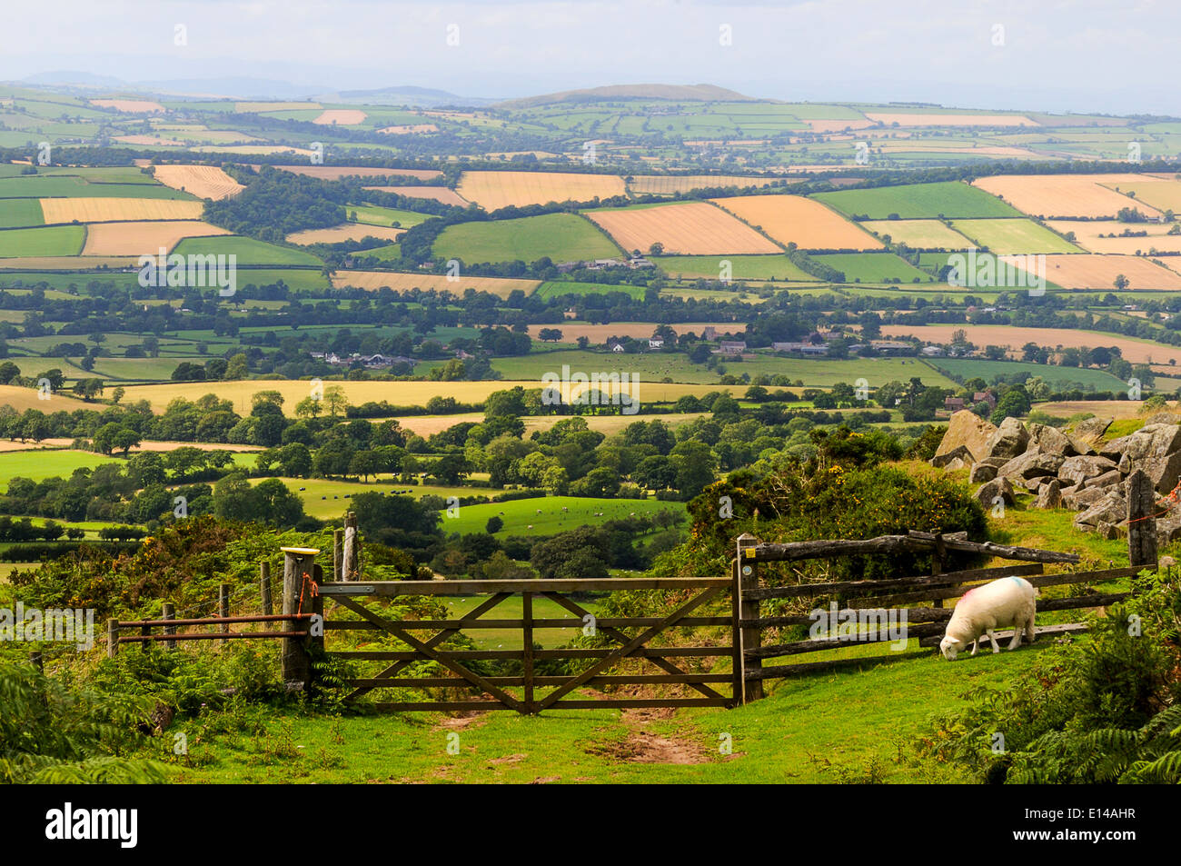 Looking over five bar gate on the Shropshire Way from Brown Clee Hill at Corvedale. - Stock Image