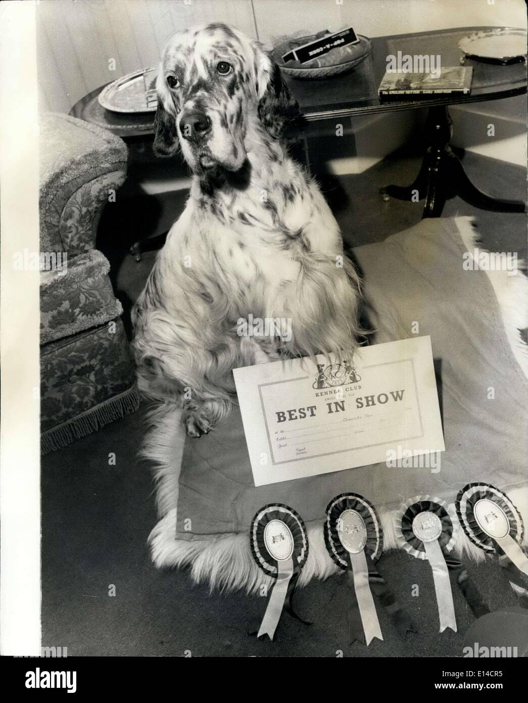 Apr. 17, 2012 - Crufts Dog Show: Crufts Champion 1977 English Setter this year's supreme champion ''Bourne House Dancing master' - Stock Image