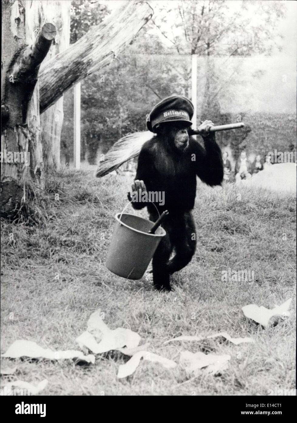 Apr. 17, 2012 - All Part Of His Daily Routine: ''Waldemar'' the young chimpanzee at the Hellabrunn Zoo in Munich, Germany, is very particular about keeping his part of the reservation clean and tidy and consequently part of his daily routine is to stroll around with his bucket and broom cleaning up all the litter. - Stock Image