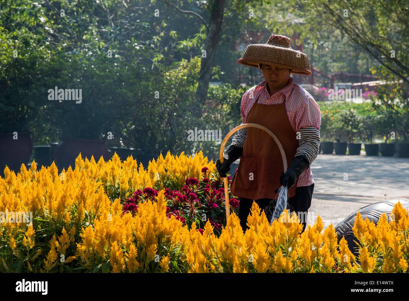Woman wearing a straw hat, watering flowers, Po Lin Monastery, Lantau Island, Hong Kong, China - Stock Image