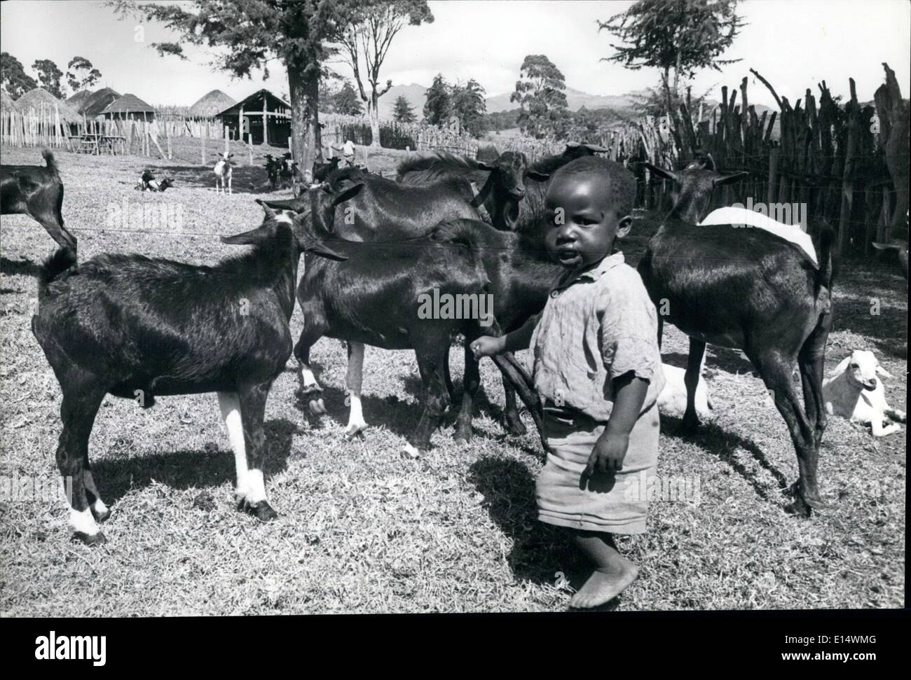Apr. 18, 2012 - Nijirs Waturu the old Chief's youngest son-at the age of three-in true African tradition learns herding sheep in young years. - Stock Image