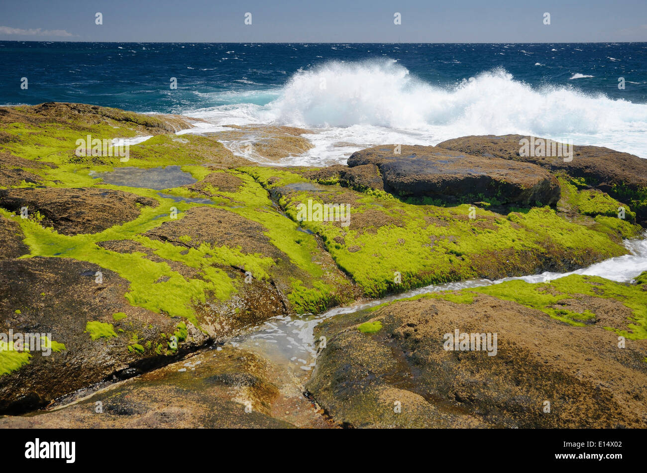 Surf on lava rocks covered in green algae, Playa Paraiso, Adeje, Tenerife, Canary Islands, Spain - Stock Image
