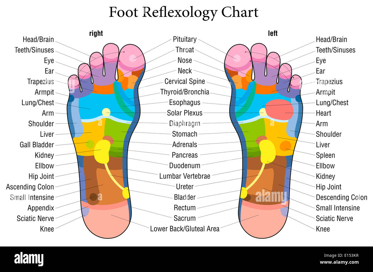 Foot reflexology chart with accurate description of the foot reflexology chart with accurate description of the corresponding internal organs and body parts ccuart Image collections