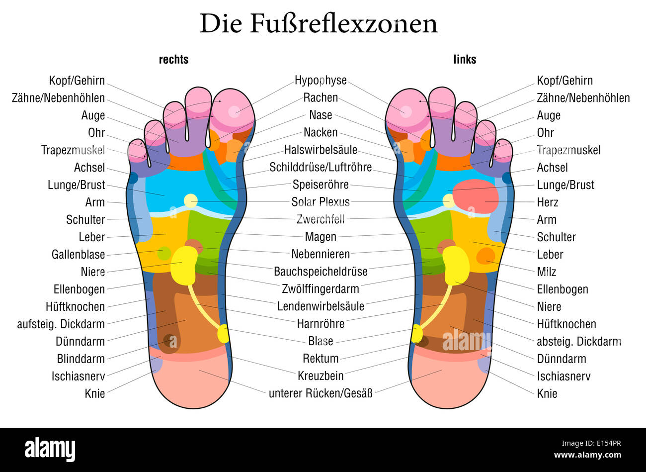 Foot reflexology chart with accurate description german labeling foot reflexology chart with accurate description german labeling of the corresponding internal organs and body parts ccuart Image collections