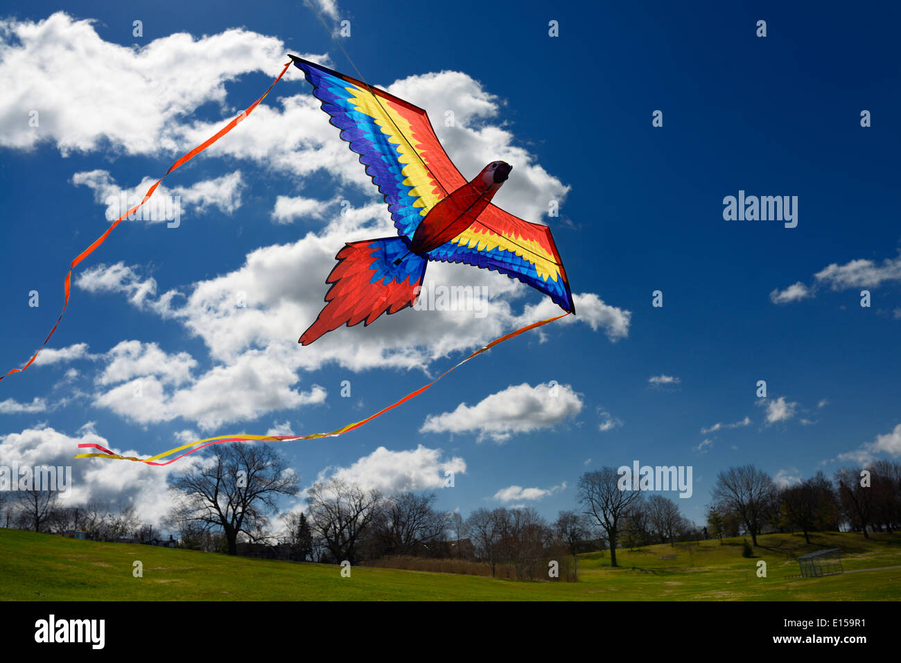 Macaw Parrot Kite flying against a blue sky in spring at Riverdale Park Toronto - Stock Image