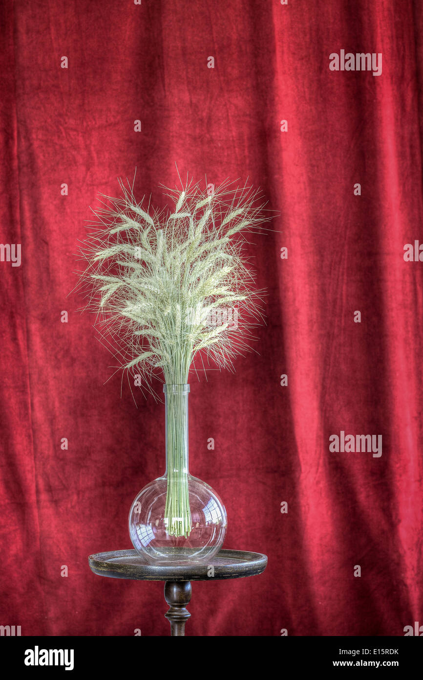 wheat in a flask on a pedestal backed by a velvet curtain Stock Photo